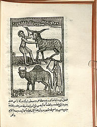 First illustrated print of the Islamic world | © BSB/ Res/4 A.or. 3548