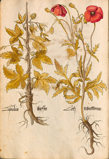 Book of medical plants | © BSB/ Cod.icon. 26