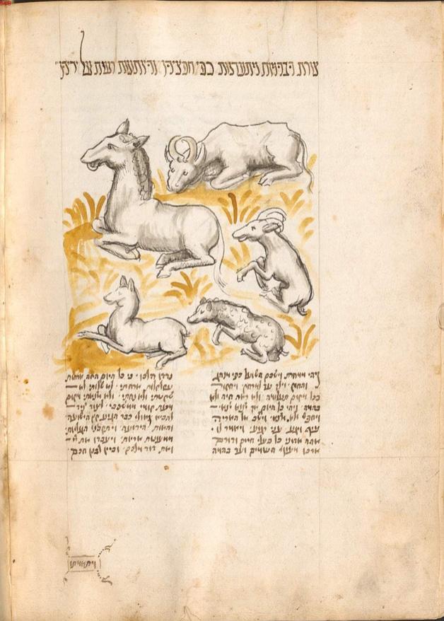 Hebräisch und Jiddisch